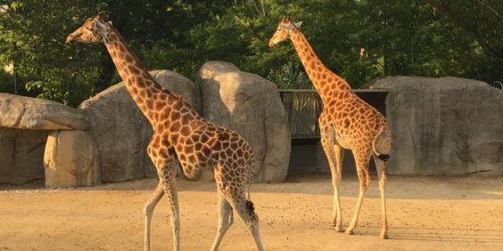 Les nocturnes du Parc Zoologique