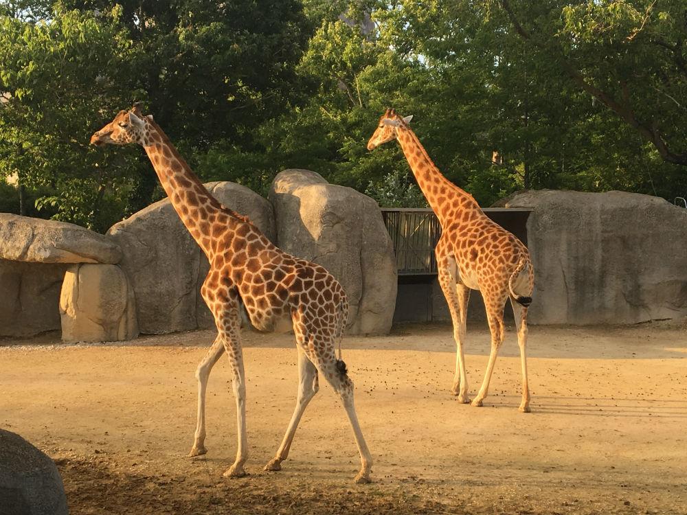 jour des nocturnes au Zoo de Vincennes