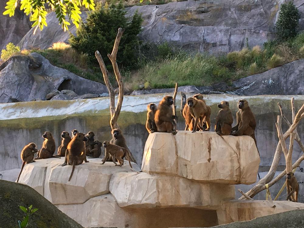 parc zoologique de paris : nocturne les jeudis soir