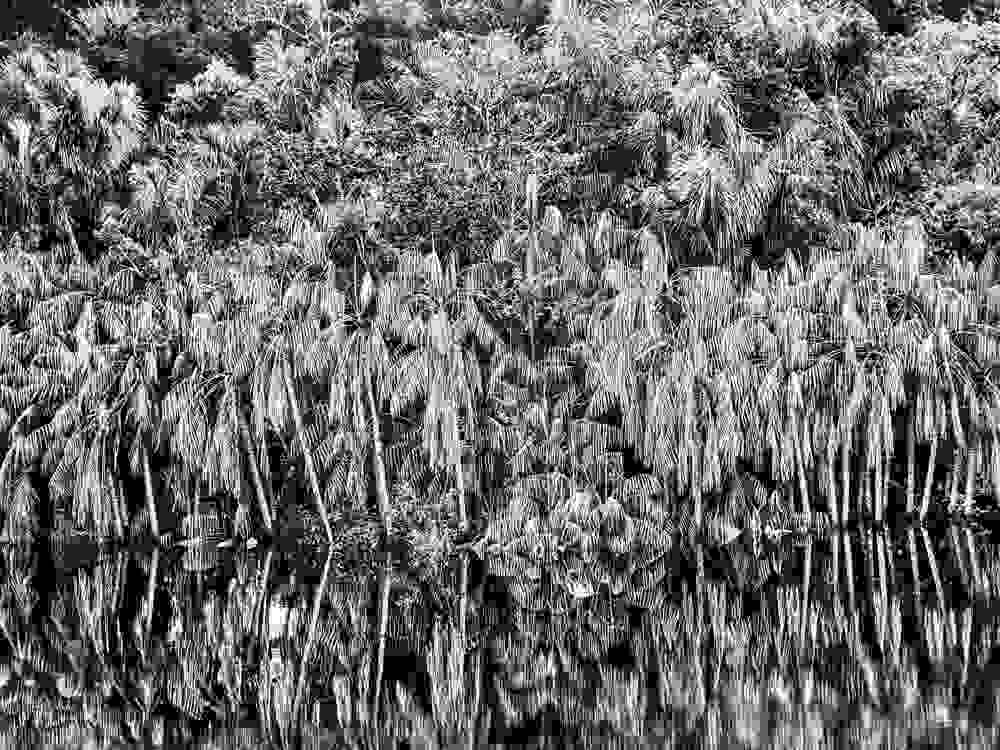 philharmonie expo Amazonia
