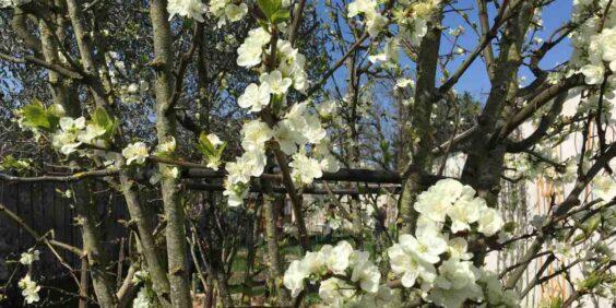 Les jardins de l'impasse Gobétue à Montreuil