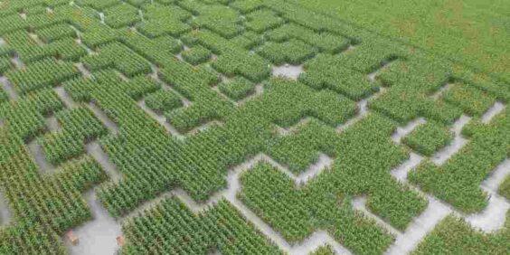 Pop Corn Labyrinth