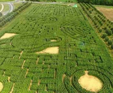 labyrinthe de Senart