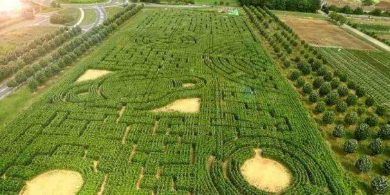 Labyrinthe de Sénart au Carré