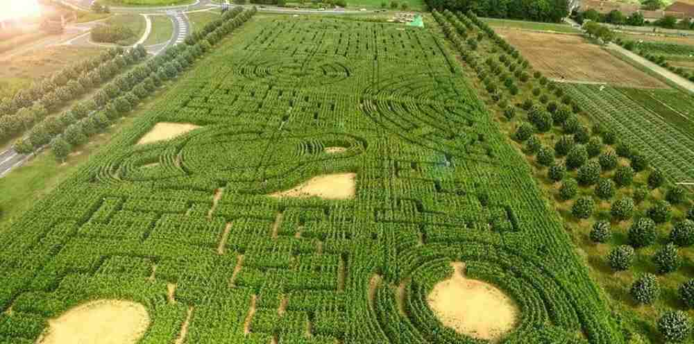 labyrinth of Senart