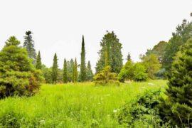 the Arboretum of Versailles
