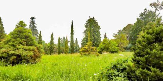 L'Arboretum de Versailles-Chevreloup