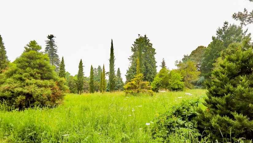 Arboretum of Versailles Chevreloup
