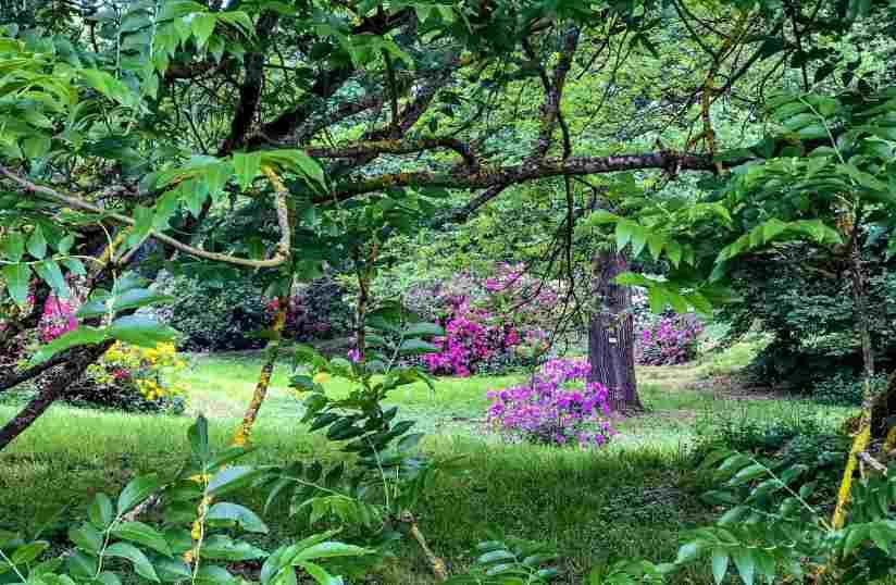 L'Arboretum de Versailles Chevreloup à découvrir absolument