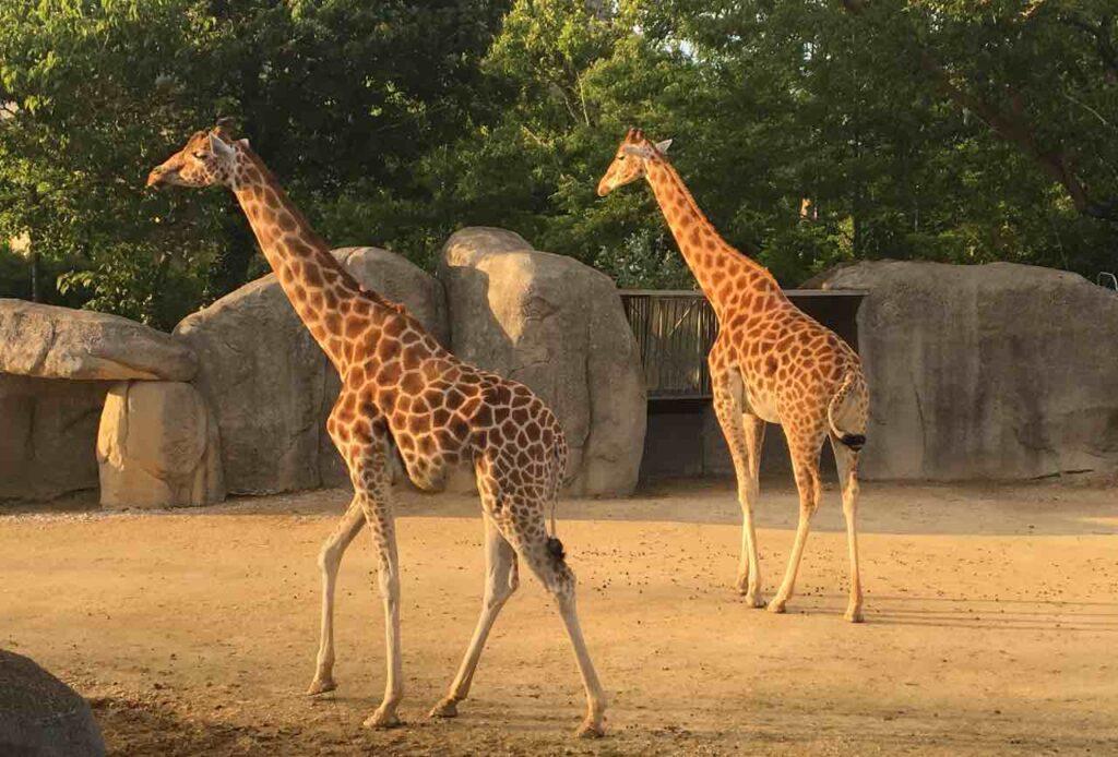 the zoological park of paris price list