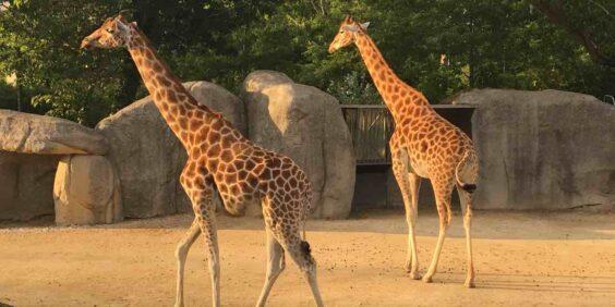 The Zoological Park of Paris