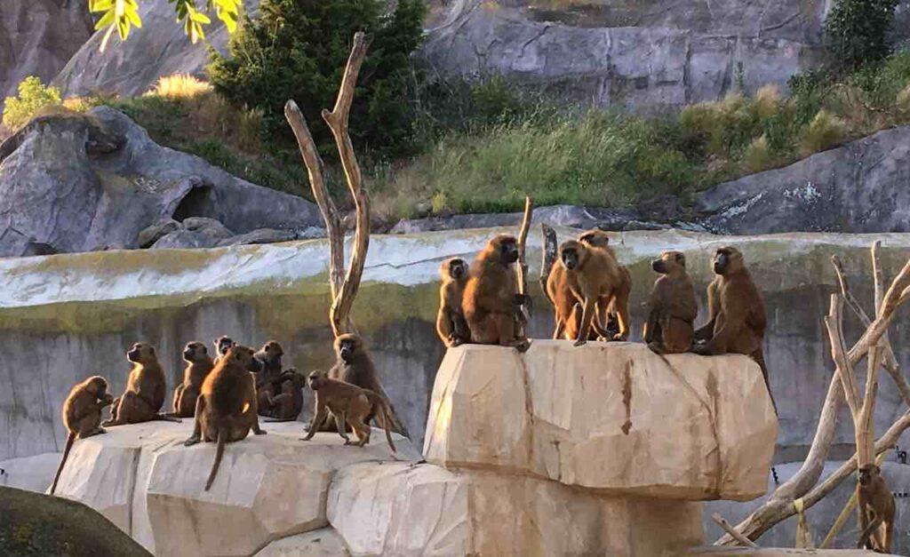 le zoo de paris billets